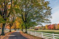 Wiejska Droga w wiejskim Maryland podczas jesieni Obrazy Royalty Free