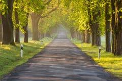 Wiejska droga w wiośnie Fotografia Stock