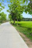 Wiejska droga w zielonym ryżu polu obrazy stock