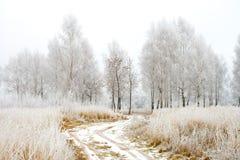 Wiejska droga w zimy drewnie Obraz Royalty Free