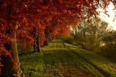 Wiejska droga w zmierzchu na jesieni Zdjęcie Royalty Free