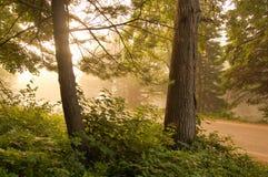 Wiejska Droga wschód słońca Przez mgły zdjęcia stock