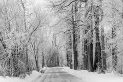Wiejska droga Z Ciężkim Hoar mrozem zdjęcia stock