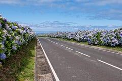 Wiejska droga z hortensjami Fotografia Stock