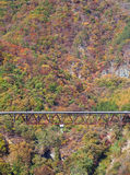 Wiejska droga z jesieni drzewem Fotografia Royalty Free