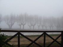 Wiejska droga z nagimi drzewami, mgłowa zima Zdjęcia Royalty Free