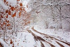 Wiejska droga z pięknymi drzewami na stronach w zima dniu Zdjęcia Stock