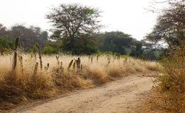 Wiejska droga z traw polami w Bagan, Myanmar Obraz Royalty Free