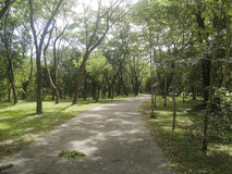 Wiejska droga z tunelowym drzewem Zdjęcie Stock