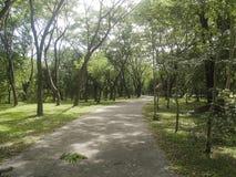Wiejska droga z tunelowym drzewem Zdjęcia Royalty Free