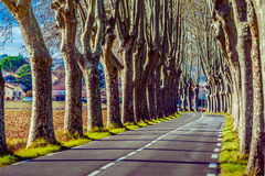 Wiejska droga z wysokimi drzewami na obich stronach Fotografia Royalty Free