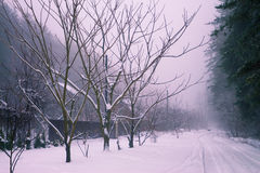 Wiejska droga zakrywająca z śniegiem Obrazy Royalty Free