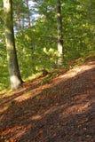 wiejska jesień sceneria Obraz Royalty Free