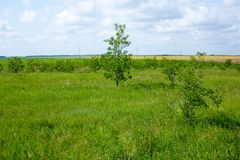 Wiejska krajobrazowa zielona trawa i drzewa Obraz Stock