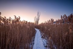wiejska krajobrazowa zimy Wschód słońca nad śnieżną drogą Obraz Royalty Free