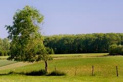 wiejska krajobrazu Zdjęcie Royalty Free