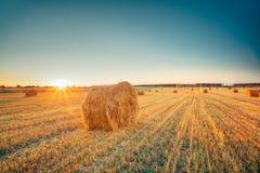 Wiejska krajobrazu pola łąka Z siano belami Po żniwa W Pogodnym wieczór Przy zmierzchem Zdjęcia Royalty Free