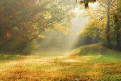 wiejska mgłowa scena fotografia royalty free