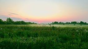 Wiejska scena jest polem zbierającymi dla zimy na zieleni polu sianem i Cutted zielona trawa Zmierzch na horyzoncie Zieleń zbiory