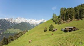 Wiejska scena od gospodarstwa rolnego wśród halnego paśnika w Ahrntal, Ita Obraz Royalty Free