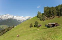Wiejska scena od gospodarstwa rolnego wśród halnego paśnika w Ahrntal, Ita Fotografia Stock
