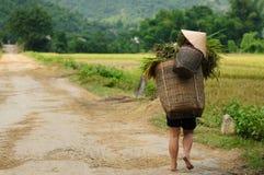 wiejska scena Vietnam zdjęcia royalty free