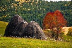 Wiejska scena w jesieni Zdjęcie Stock
