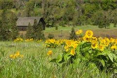 wiejska stajnia z żółtymi wildflowers Zdjęcie Royalty Free