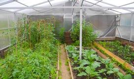 Wiejska szklarnia dla rośliien Zdjęcia Stock