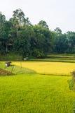 Wiejska tradycyjna wioska w idyllicznym krajobrazie, Sulawesi, Indonezja fotografia royalty free