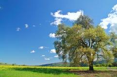 wiejska wiosna obszarów wiejskich Zdjęcie Stock