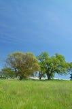 wiejska wiosna obszarów wiejskich Obraz Stock