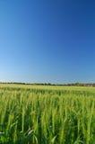 wiejska wiosna obszarów wiejskich Obrazy Stock
