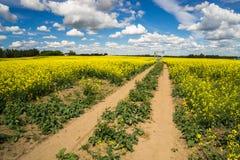 Wiejski Alberta - droga dojazdowa pompowa dźwigarka obraz royalty free