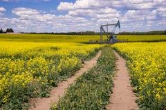 Wiejski Alberta - Nafcianej pompy dźwigarka po środku kwitnącego canola fi zdjęcia stock