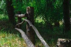 Wiejski drewniany ogrodzenie w tle paprocie i ochraniający spru obrazy royalty free