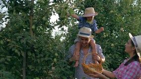 Wiejski dzieciństwo, młodzi rolnicy z synem zbiera jabłka przy sadem zbiory wideo