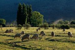 Wiejski gospodarstwo rolne krajobraz - Południowa Afryka zdjęcie royalty free