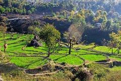 Wiejski Himachal n organicznie uprawia ziemię daleki Himalajski region Zdjęcia Royalty Free