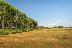 Wiejski holendera krajobraz na słonecznym dniu w lecie Zdjęcie Stock
