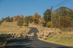Wiejski jesień krajobraz i stado barani skrzyżowanie drogi zdjęcia stock