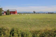 Wiejski kanadyjczyka krajobraz w Sierpień Zdjęcia Stock
