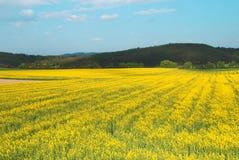 Wiejski krajobraz Fotografia Royalty Free