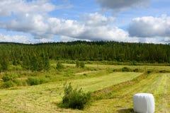 Wiejski krajobraz Zdjęcia Royalty Free