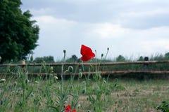 Wiejski krajobraz i czerwień maczek Zdjęcie Royalty Free
