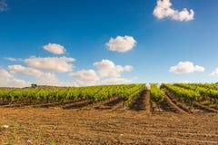 Wiejski krajobraz, plantacja winnicy Fotografia Royalty Free