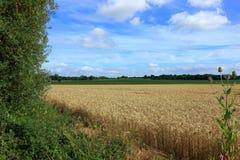 Wiejski krajobraz pokazuje łąki i pola wokoło Pluckley zdjęcie stock