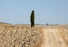 Wiejski krajobraz Tuscany Zdjęcia Stock