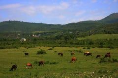 Wiejski krajobraz w lato sezonie zdjęcia stock