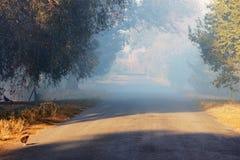 Wiejski krajobraz w mgle Zdjęcie Stock